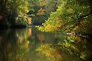 fall across the lake by dc witmer