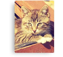 Retro Kitten Photo Canvas Print