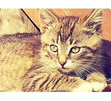 Retro Kitten Photo 2 Photographic Print