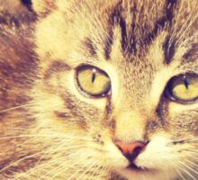 Retro Kitten Photo 2 Sticker
