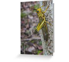 Grass Hopper in Belize Greeting Card