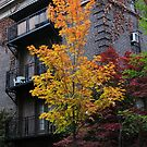 Autumn Tree and Vintage Building by Marie Van Schie