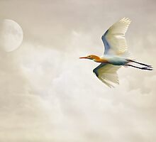 Egret In The Sky by TOM YORK