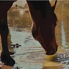 The Watering Hole - Drinking Percheron Horse by NaturePrints