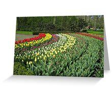 Arcs of Colour - Keukenhof Gardens Greeting Card