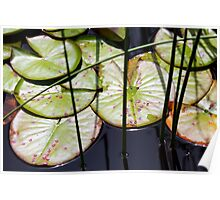 Lily Pad Abstract Poster