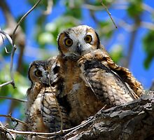 Whooo are you? by Jody Johnson
