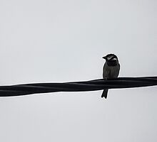 Bird on Wire by TheOzyryz