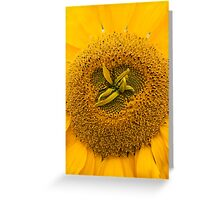 Close up of a sunflower Greeting Card