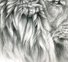 King - Lions profile g044 by schukina Sticker