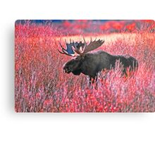 BULL MOOSE,YELLOWSTONE NP Metal Print