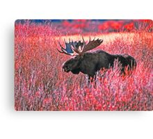 BULL MOOSE,YELLOWSTONE NP Canvas Print
