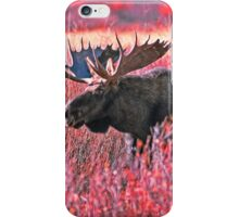 BULL MOOSE,YELLOWSTONE NP iPhone Case/Skin