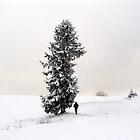 Alone On The Windward Side by Nedim Bosnic