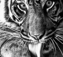 Tiger Tongue Sticker