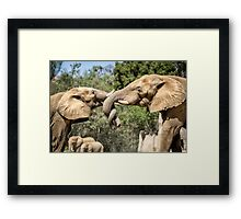 Elephant Fight Framed Print