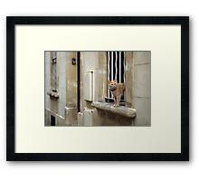 Ginger Cat - Arles, France Framed Print
