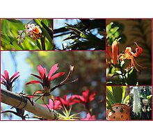Marvelous Flowers - Travel Photography Photographic Print