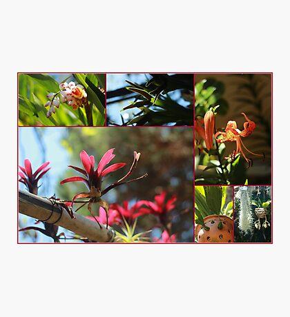 Marvelous Flowers - Travel Photography Photographic Print