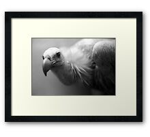 Animal 6 Framed Print