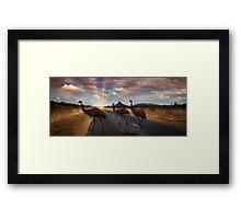 3 Emu's Framed Print