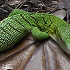 Green Monitor Lizard by Sandra Caven