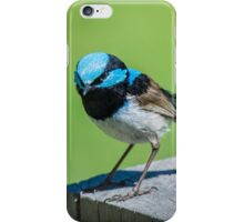Australian Superb Fairy-Wren. iPhone Case/Skin