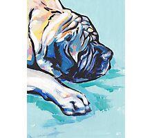English Mastiff Bright colorful pop dog art Photographic Print