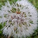 Dew drop morning by weecritter
