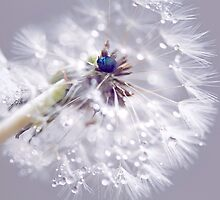 WISH  by Bloom by Sam Wales