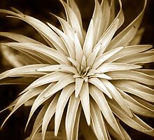 Monochrome Plant Abstract by Christina Rollo