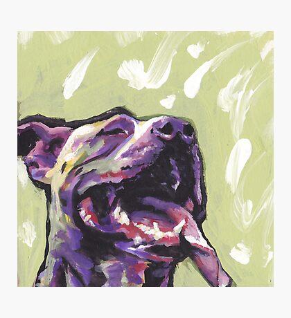 Pitbull Dog Bright colorful pop dog art Photographic Print