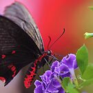 red and black by ANNABEL   S. ALENTON