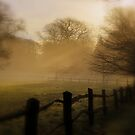 """ Crepuscular Arboretum "" by Richard Couchman"