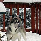 Sadie Digs Snow by Lydia Marano