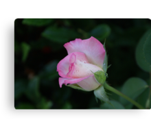 Pink is beautiful! La Mirada, CA USA (Read Description) Canvas Print