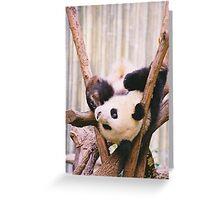 Panda Time Greeting Card