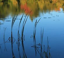 Fall Reflections by Chris Coates