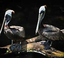 Pelican Pair by Dawn Crouse
