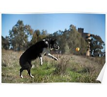 Full Flight ...To Her Ball. Poster
