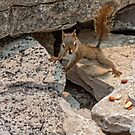 I am nuts of nuts by Manon Boily