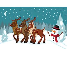 Reindeer in the Snow Photographic Print