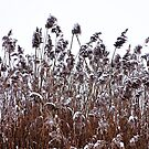 Wild Snow Covered Grass by Debbie Oppermann