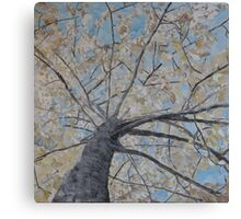 Making roots Canvas Print