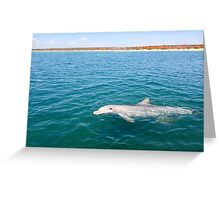 Dolphin Greeting Greeting Card