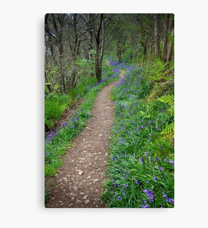 Along the Bluebell Path Canvas Print