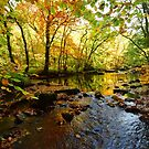 Dartmoor: Autumn on the river Teign by Rob Parsons