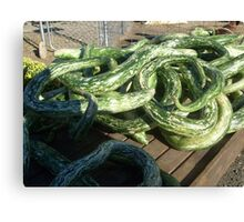 Imagine My Surprise When I Came Upon Snakes on the Farm Market Table! Canvas Print