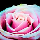 Never A Rose Without A Prick by Jessica Manelis