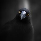 Currawong Gothica  by Larry Lingard-Davis